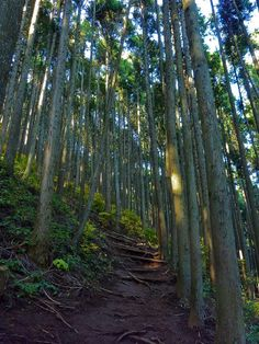 Mt. Mitake hike - did this so many times as a kid. Can't wait to go back again!!