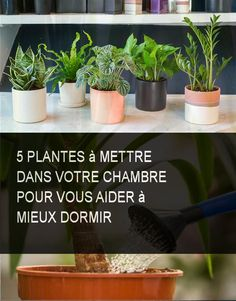 5 plants to put in your room to help you sleep better - New Deko Sites Hanging Beds, Mosquito Repelling Plants, Diy Plant Stand, Herbs Indoors, Cool Plants, Gardening Tips, Flower Pots, Planter Pots, Backyard
