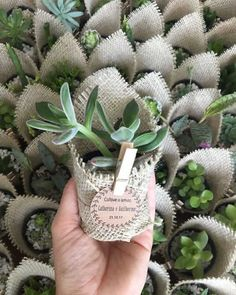 Suculentas como recuerdos de boda 🌵🌸 16 - Misty Tutorial and Ideas Succulent Wedding Favors, Succulent Gifts, Succulent Gardening, Wedding Favours, Succulents Diy, Pioneer Gifts, Pioneer School Gifts, Wedding Gifts For Guests, Flower Pots