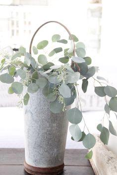 Eucalyptus in White