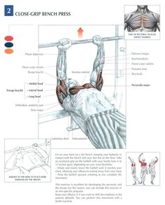 Close Grip Bench Press  MuscleUp Bodybuilding. ~ mikE™