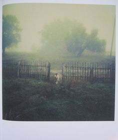 polaroid andrei tarkovsky