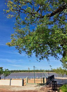 Río Paraguay y árbol de Asunción-Paraguay