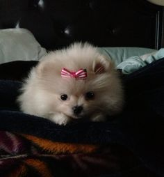"""""""I'm just a little down after that woman said,'What a cute little boy'...Really.... The bow is PINK!!!"""""""