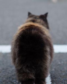 お尻すごいボリューミー #猫ポトレ部 #fujifilm #fujifilm_xseries #fujixclub #team_fuji #xphotographer #fujifeed #xe2 #xf56mm #cat #catstagram #instacat #catsofinstagram #にゃんすたぐらむ #ねこ部 #hip #ground #vscocam #vsco #minimal #reco_ig by capybaraparadise