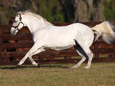 Alphabet soup_Sire of 44 stakes winners; progeny earnings over USD 36 million