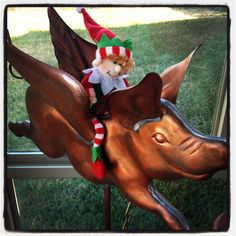 12/25/12  Elf says When pigs fly (and they do)!