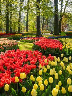 Tulpen in Keukenhof. Kom je genieten bij @visitkeukenhof?