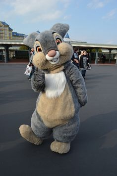 OMG THUMPER AT DISNEY  @Donna Chuco!