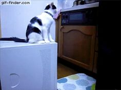 Cat Trolling   Gif Finder – Find and Share funny animated gifs