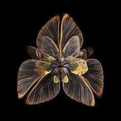 Mimesis: Blooms of Insect Wings by Photographer Seb Janiak