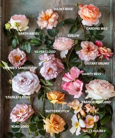 Your Ultimate Guide to Cultivating Gorgeous Roses, According to a Flower Farmer Who Grows Them for a Living Types Of Flowers, Pretty Flowers, Green Flowers, Cut Flowers, Floral Flowers, Spring Flowers, Cut Flower Garden, A Flower, Garden Roses