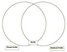 Venn Diagram plant animal cells Comparison Cells unit part 1 KEY ...