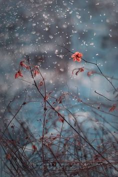 Every Autumn now my thoughts return to snow. Snow is something I identify myself with. Like my father, I am a snow person. Phone Backgrounds, Wallpaper Backgrounds, Dame Nature, Beautiful Nature Wallpaper, Monochrom, Flower Images, Flowers Nature, Flower Wallpaper, Aesthetic Pictures