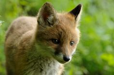 A Voice for Animals Scholarship for students 14-18. Fifteen prizes available! Deadline May 25.