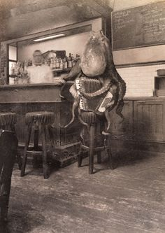 Octopus Playing Accordion - Simon Warmer