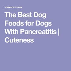 The Best Dog Foods for Dogs With Pancreatitis | Cuteness