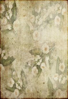 Vintage White Flowers Green Leaves Backdrop for Photography GA-63 – Dbackdrop
