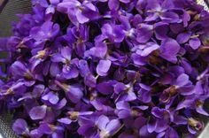 Como fazer violeta florescer - Dicas para um jardim perfeito!. As violetas são belas flores que podem embelezar qualquer jardim. Muito populares no mundo todo, elas estão presentes em toda a cultura mundial, sendo símbolo de amor entre divindades e também entre c...
