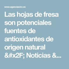 Las hojas de fresa son potenciales fuentes de antioxidantes de origen natural / Noticias / SINC