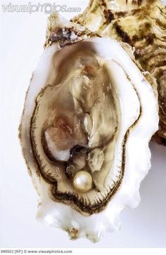 Real pearl in shell-This is so amazing to me.