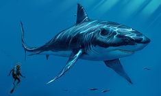 Megalodon fossilized jaws have never been found. But it's calculated that its jaws packed a 24,400 to 41,000-pound bite force – the strongest of any animal ever recorded.