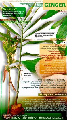 Ginger roots. Infographic. Summary of the general characteristics of the Ginger plant. Medicinal properties, benefits and uses more common of Ginger roots. Pharmacognosy - Medicinal plants - Herbs. http://www.medicinalplants-pharmacognosy.com/herbs-medicinal-plants/ginger-root/benefits-infographic/
