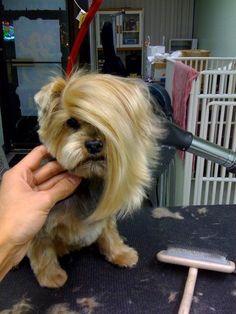 Poor dog!