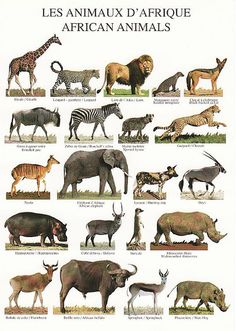 african animals postcard by HIPPO! HIPPO! HIPPO!, via Flickr
