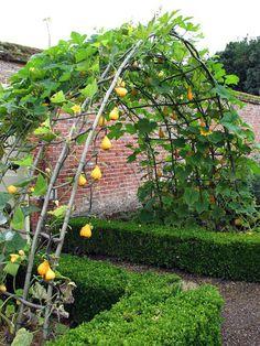 kitchen garden entry, gourds