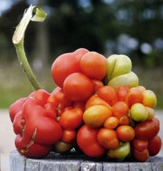Ever see a tomato like this? Grow something cool and different this season.