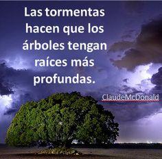 Las tormentas hacen que los árboles tengan raíces más profundas.