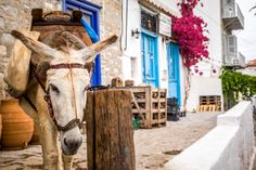 Donkey outside a shop, Hydra Island, Greece