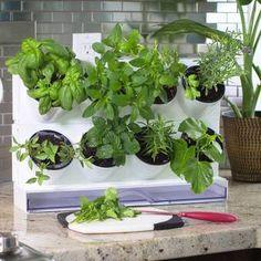 Outdoor Living Today 8 ft x 8 ft Western Red Cedar Raised Garden Small Plants, Indoor Plants, Indoor Gardening, Gardening Tips, Organic Gardening, Vertical Planter, Vertical Gardens, Herb Farm, Plastic Planter