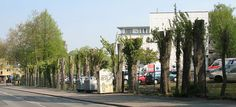 It can happen anywhere: an example of bad tree pruning in Bochum, Germany