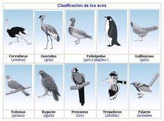 aves(2).JPG