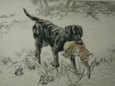 Fine Coloured Dry Point Etching Black Labrador Retriever by Henry Wilkinson British Artist (1921-2011) Limited Edition 58/75   A beautiful hand finished dry point etching of a black labrador retrieving a hare. By the famous British artist Henry Wilkinson signed in pencil lower right.  Henry Wilkinson was a master engraver for about 70 years, originally working on illustrations for books. Wilkie worked with Vernon Stokes who was acknowledged as the master of canine engraving. After Stokes...