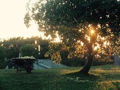 Maison centenaire Rimouski  219 Boulevard du Sommet  Surprenante ancestrale pièce qui prend ses aises à la campagne tout en étant en ville. Vous en aurez plein la vue ! À l'avant : la ville, l'île, la mer ! À l'arrière : une petite forêt d'arbres fruitiers matures vous tient au frais et à l'abri des regards et dans une éclaircie tout au fond vous dorerez au soleil tout en admirant les champs et la colline.