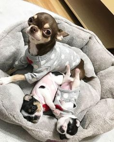 Really Cute Puppies, Cute Dogs And Puppies, Baby Dogs, I Love Dogs, Doggies, Baby Animals Pictures, Cute Animal Pictures, Dog Pictures, Cute Little Animals