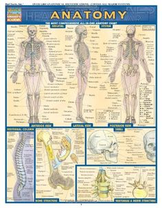Anatomy Physiology and Health Education - 1st Edition