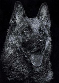 """""""German Shepherd"""" by Veri Apriyatno 2013. White pencil on black paper"""