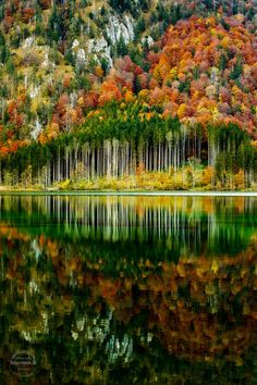 Fotografia Autumn forest de Gerhard Vlcek na Beautiful World, Beautiful Places, Beautiful Pictures, Beautiful Forest, Landscape Photography, Nature Photography, Photography Tips, Photography Tutorials, Digital Photography
