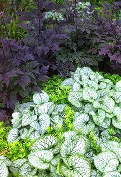 Cimicifuga, Brunnera, Sweet Woodruff...planting for a shade garden