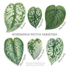 House Plants Decor, Plant Decor, Garden Plants, Indoor Plants, Indoor Garden, Pothos Plant, Plant Identification, Exotic Plants, Live Plants