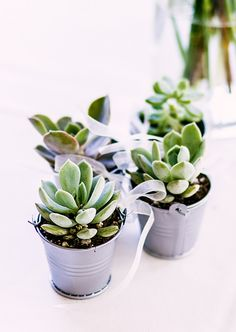 Succulent Wedding Favors, Succulent Wholesale - The Succulent Source Succulent Wedding Favors, Succulent Gifts, Wedding Favours, Wedding Flowers, Buy Succulents, Planting Succulents, Flower Decorations, Wedding Decorations, Bridal Shower Prizes
