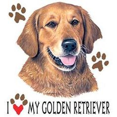 Golden Retriever Lawn T Shirt Pick Your Size Youth Medium to 6 X Large