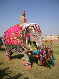 Holi festival in India. #EscapeNow