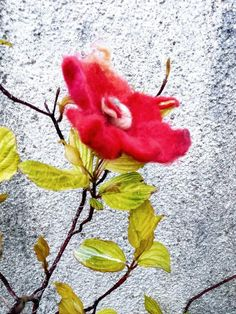 Brooch or hair pin. Unique Flowers, Beautiful Flowers, Red And Pink, Hair Pins, Brooches, Ireland, Flora, Best Gifts, Recycling