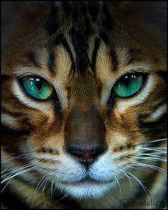 fromshelftojon:  emerald stare