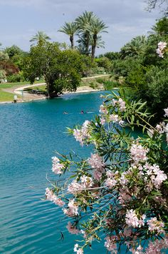 Gan HaShlosha National Park, also known by its Arabic name Sahne, is a national park in Israel. Located near Beit She'an, it has naturally warm water where visitors can swim all year. http://www.flickr.com/photos/kruijffjes/5804724565/